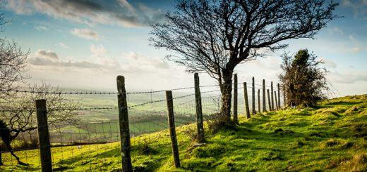 Old Fence - Lynchcombe, Somerset, UK. ID JB4_9266