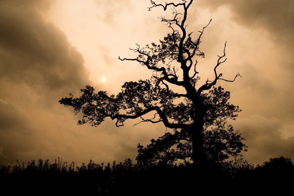 Red Storm Sun - Ophelias Sky, Holton, Somerset, UK. ID 823_5753