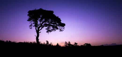 Priddy Tree - Priddy Mineries, Somerset, UK. ID 823_5811