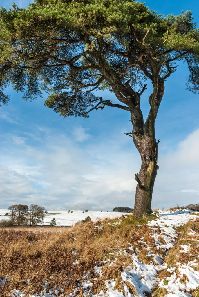 Early Snow - Priddy Mineries, Somerset, UK. ID JB5_4835