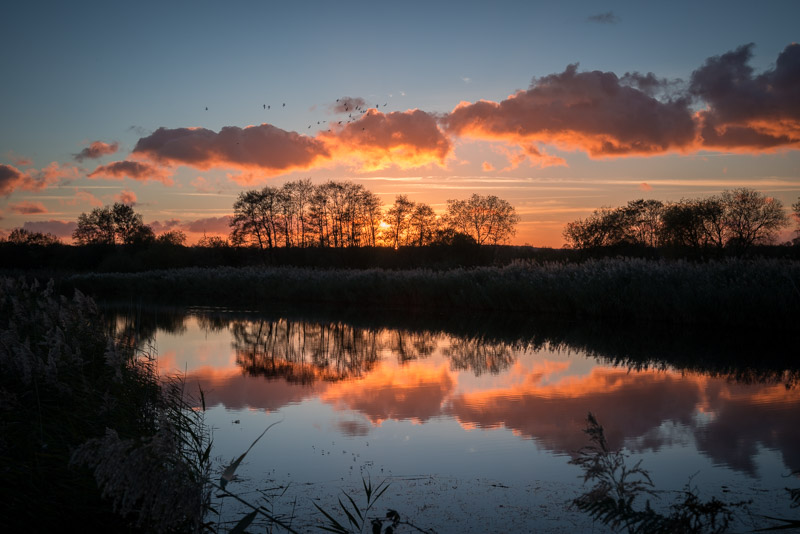 Flying Home - Loxtons Marsh, Ham Wall, Somerset, UK. ID 823_9231