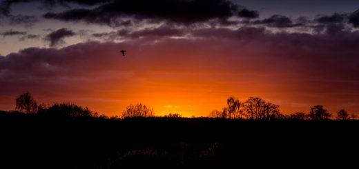 Sunset - Waltons Heath, Ham Wall, Somerset, UK. ID 824_1179