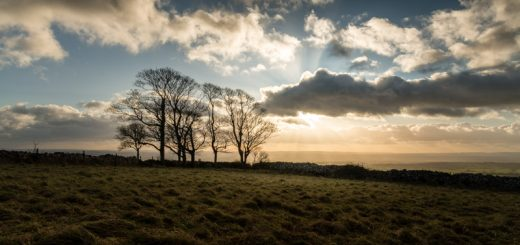 Top of the Hill - Cooks Fields, Somerset, UK. ID 824_1614