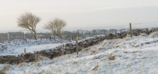 First snow of winter - North Hill, Mendips, Somerset, UK. ID 824_1999