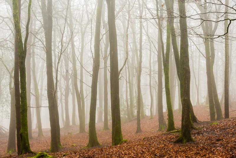 Mist - Beacon Hill Wood, Somerset, UK. ID 824_3175