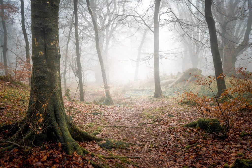 Mist - Beacon Hill Wood, Somerset, UK. ID 824_3198