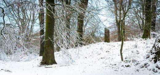 Beacon Hill Woods - Mendip Hills, Somerset, UK. ID 824_3803