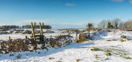 Winter at Ubley Warren - Mendip Hills, Somerset, UK. ID 824_3907