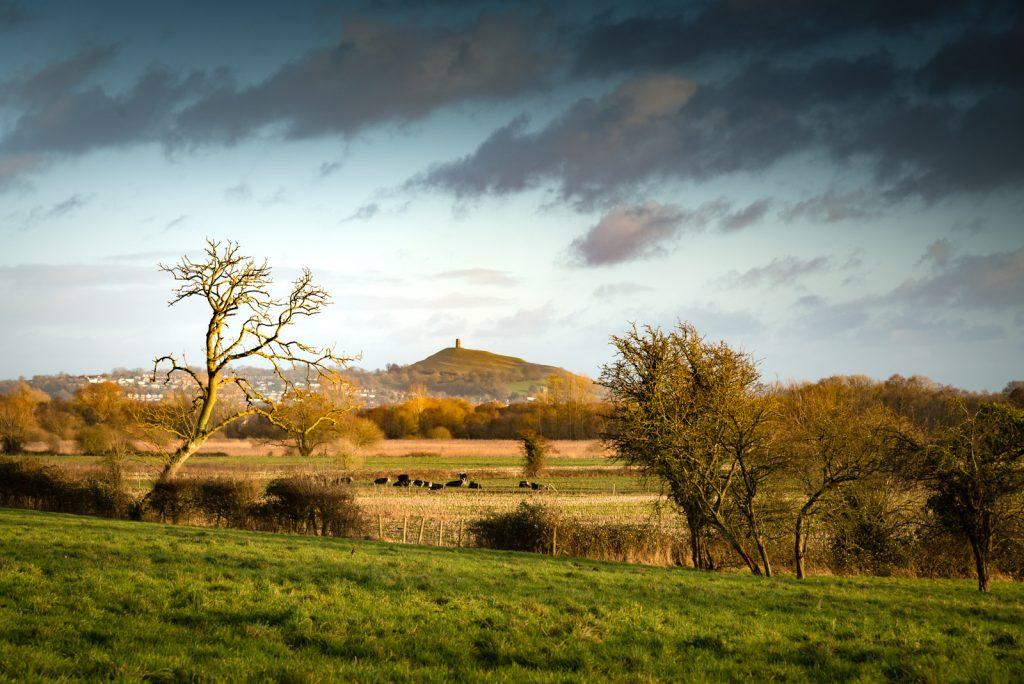 Stileway Farm - Nr Meare, Somerset, UK. ID 824_4304