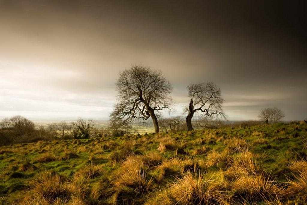 Split Trees - Deerleap, Somerset, UK. ID 824_4930