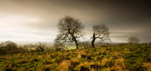 Split Trees - Deerleap, Somerset, UK. ID 824_4930