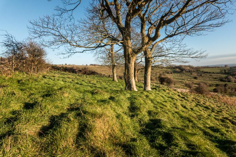 Lynchcombe - Mendip Hills, Somerset, UK. ID 824_5855