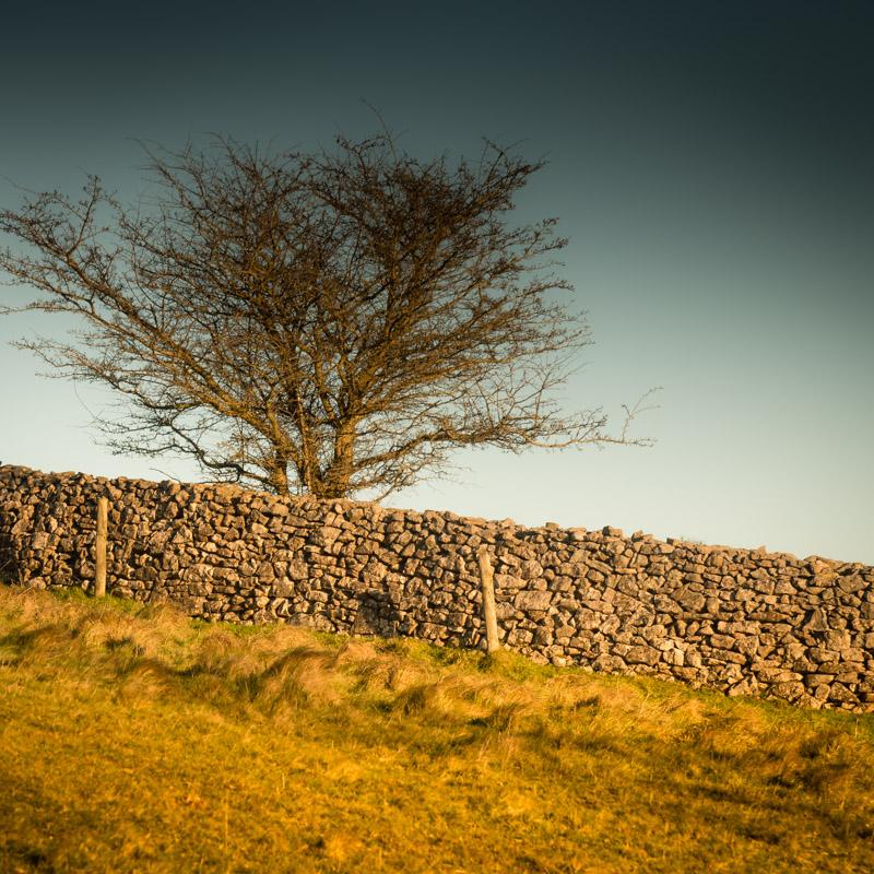 Stone Walls - Lynchcombe, Somerset, UK. ID 824_5868