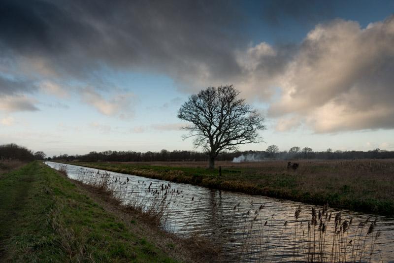 Westhay Heath - Somerset, UK. id 824_6815