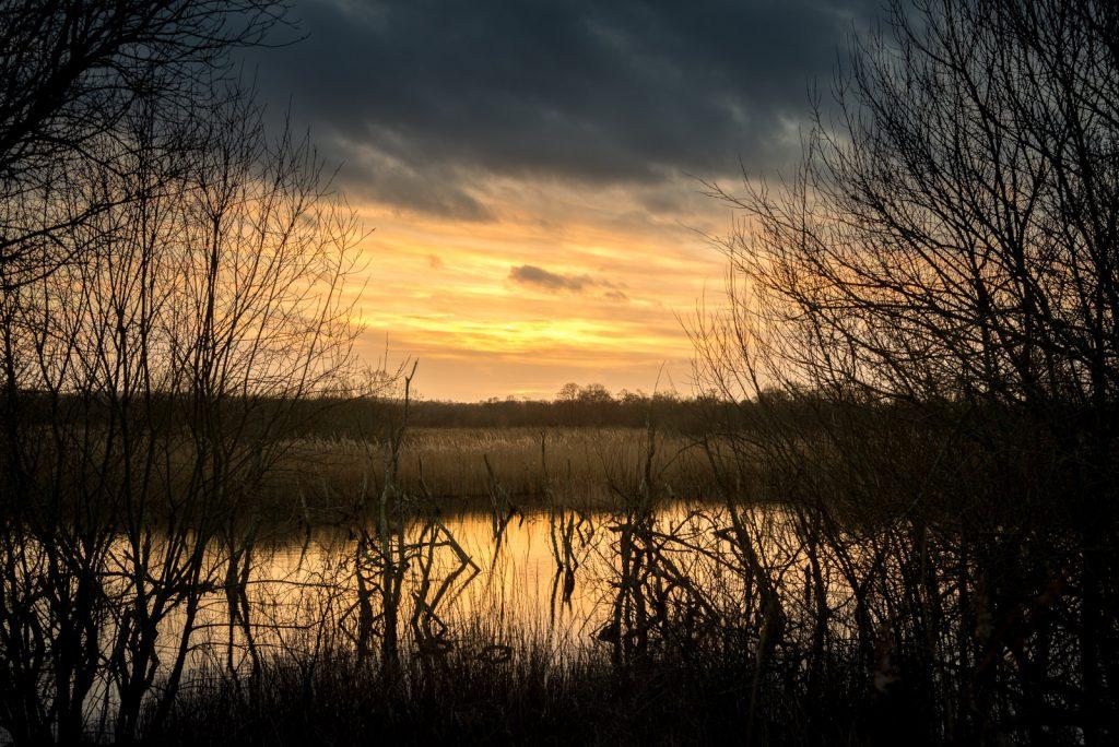Canada Farm - Shapwick Heath, Somerset, UK. ID 824_6922