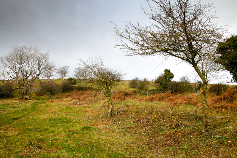 Clearing scrub by the Mendip Conservation Volunteers - 8 years ago