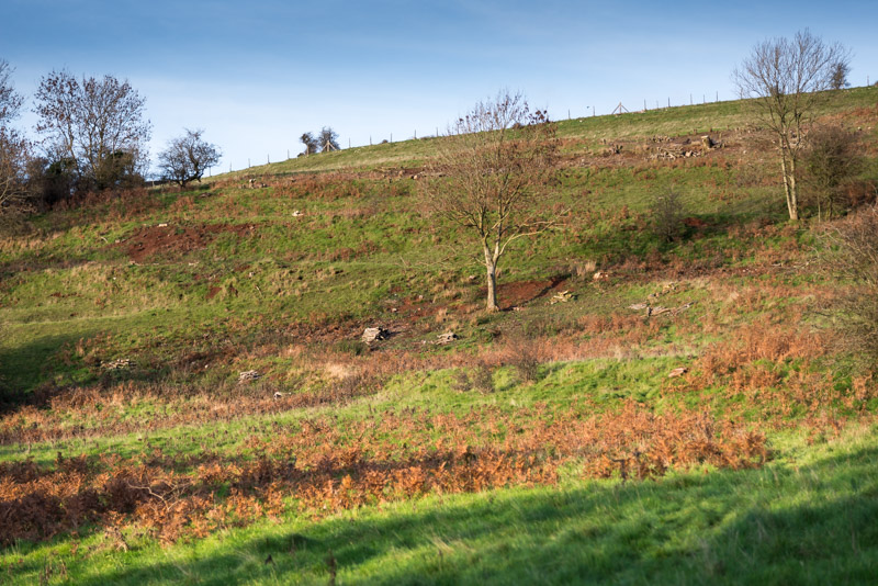 Clearing scrub by the Mendip Conservation Volunteers - 4 years ago