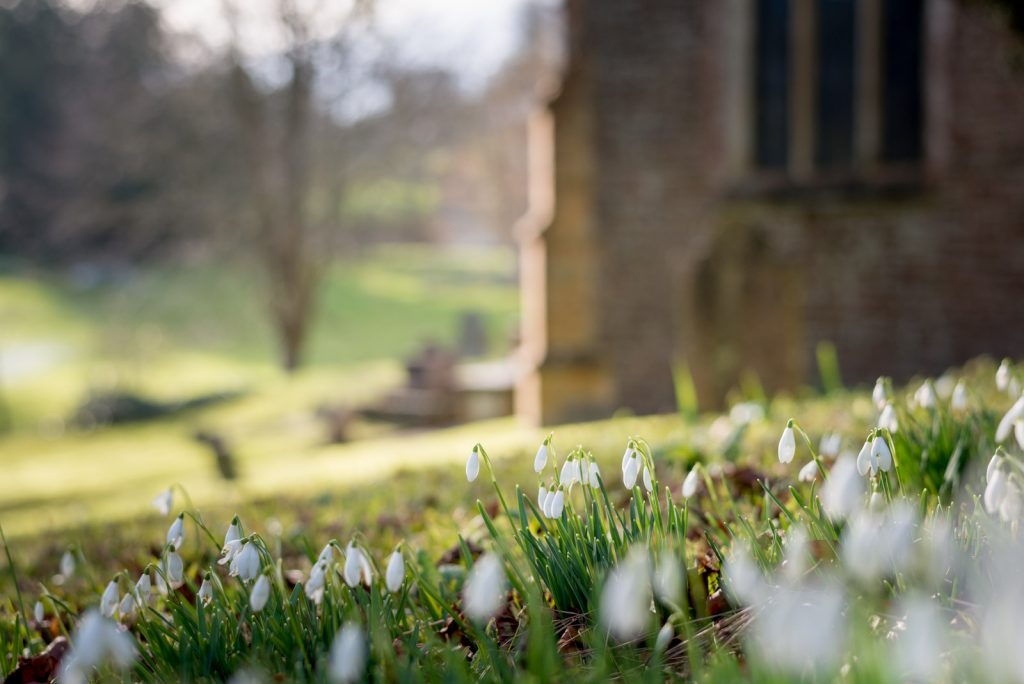 Snowdrops - Church of St John the Baptist, North Cheriton, Somerset, UK. ID 824_9511