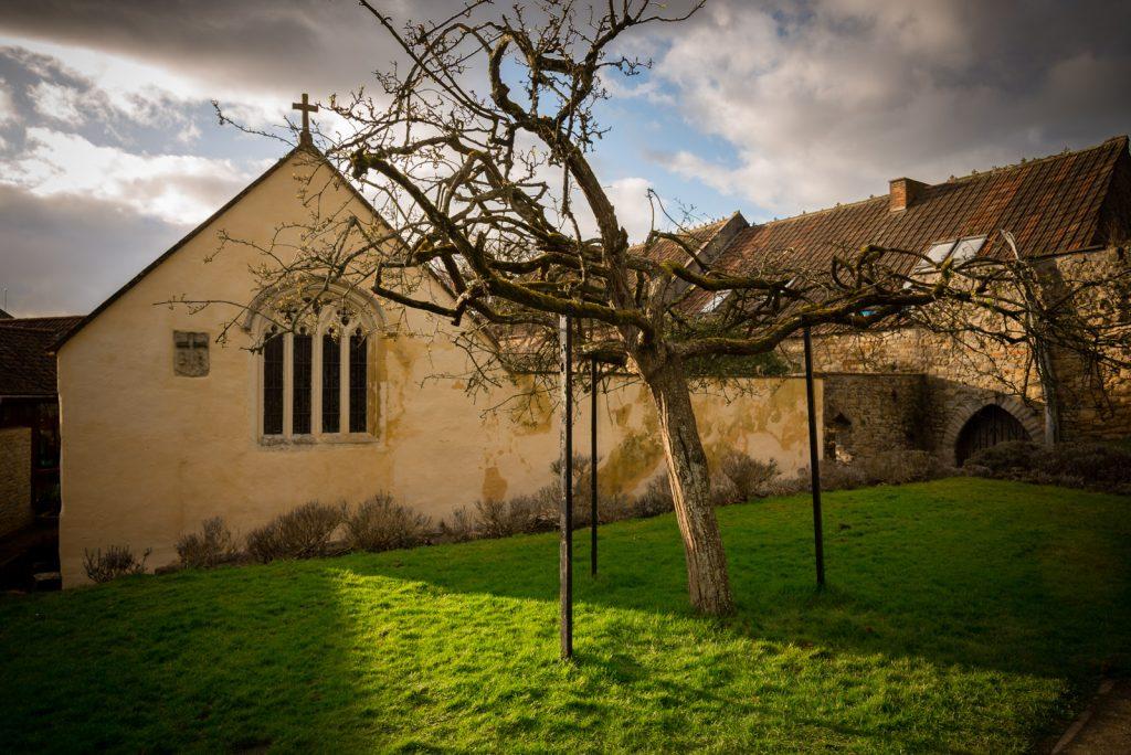 Holy Thorn - Glastonbury Abbey, Somerset, UK. ID 825_0545