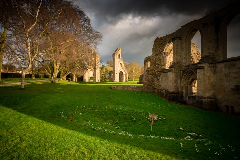 Snowdrops - Glastonbury Abbey, Somerset, UK. ID 825_0583