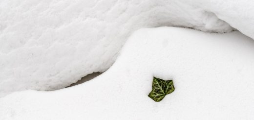 Snow - Milton, Nr Wells, Somerset, UK. ID 825_4092
