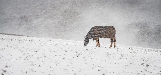 Winters Horse - Wookey Hole, Somerset, UK. ID 4577