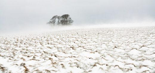 Cooks Fields in Winter - Mendip Hills, Somerset, UK. ID 825_5963