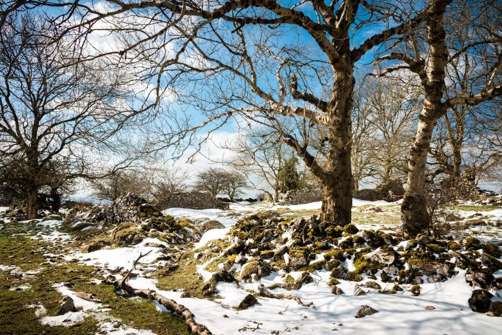Middledown - Mendip Hills, Somerset, UK. ID 825_6914