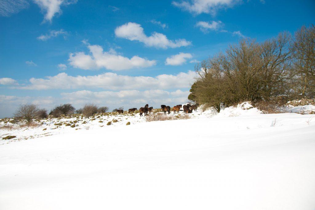 Middledown - Mendip Hills, Somerset, UK. ID 825_6950