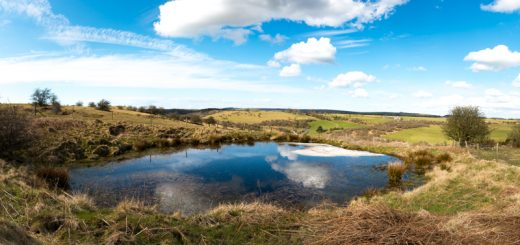 Mendip Pond - Nr Middledown, Somerset, UK. ID 825_7391