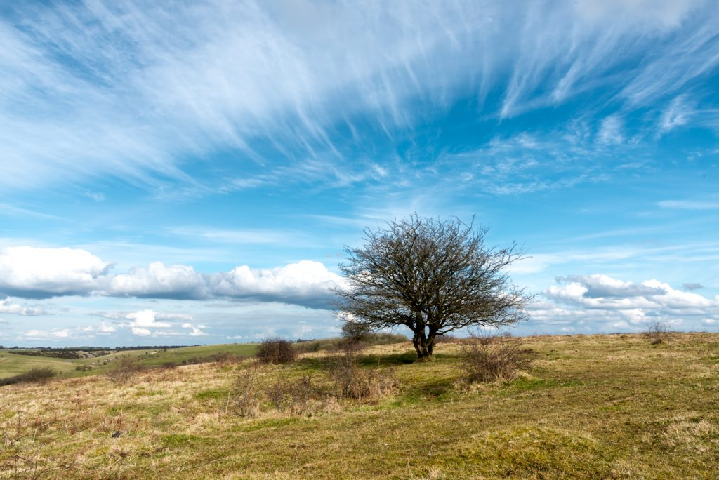 Middledown - Mendip Hills, Somerset, UK. ID 825_7630
