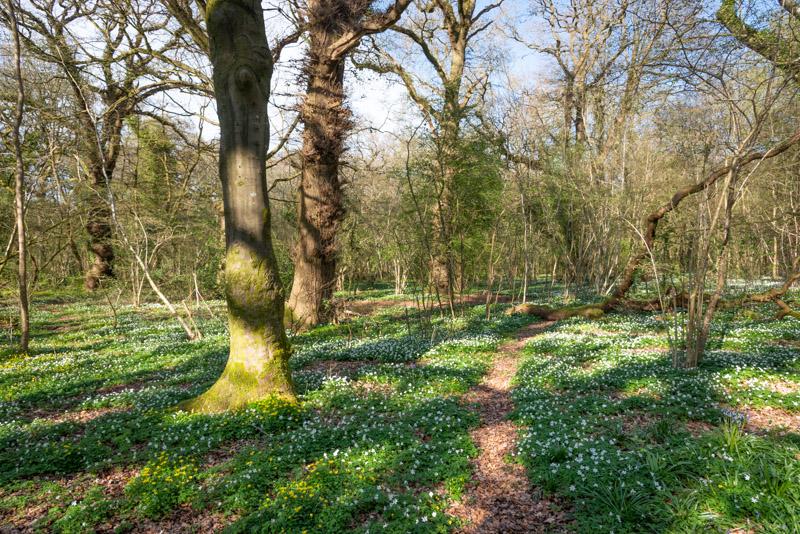 Park Wood - Nr Wells, Somerset, UK. ID 825_8464