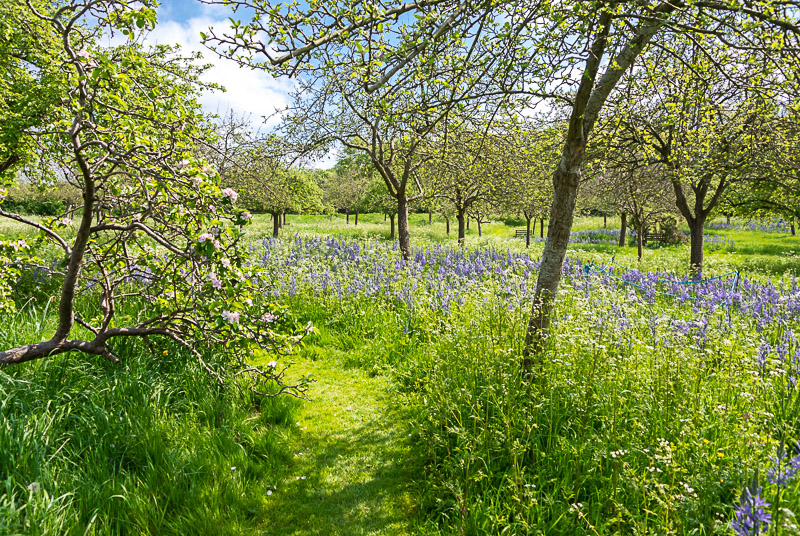 Glastonbury Abbey Orchard - Somerset, UK. ID DSC_2246