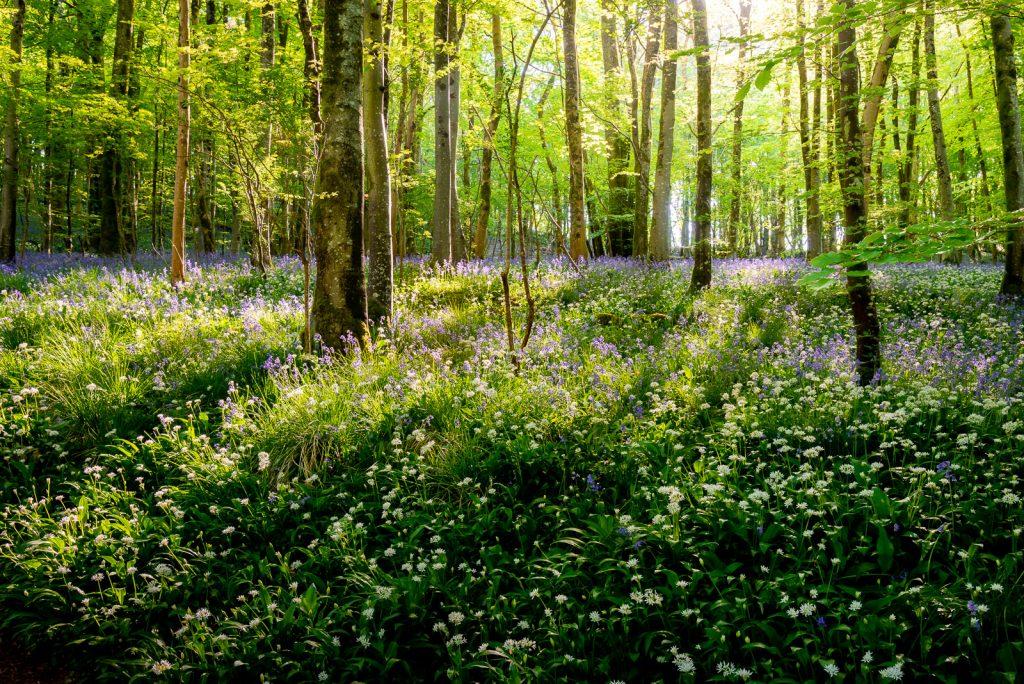 Spring Morning - Longwood, Somerset, UK. ID 825_0621H