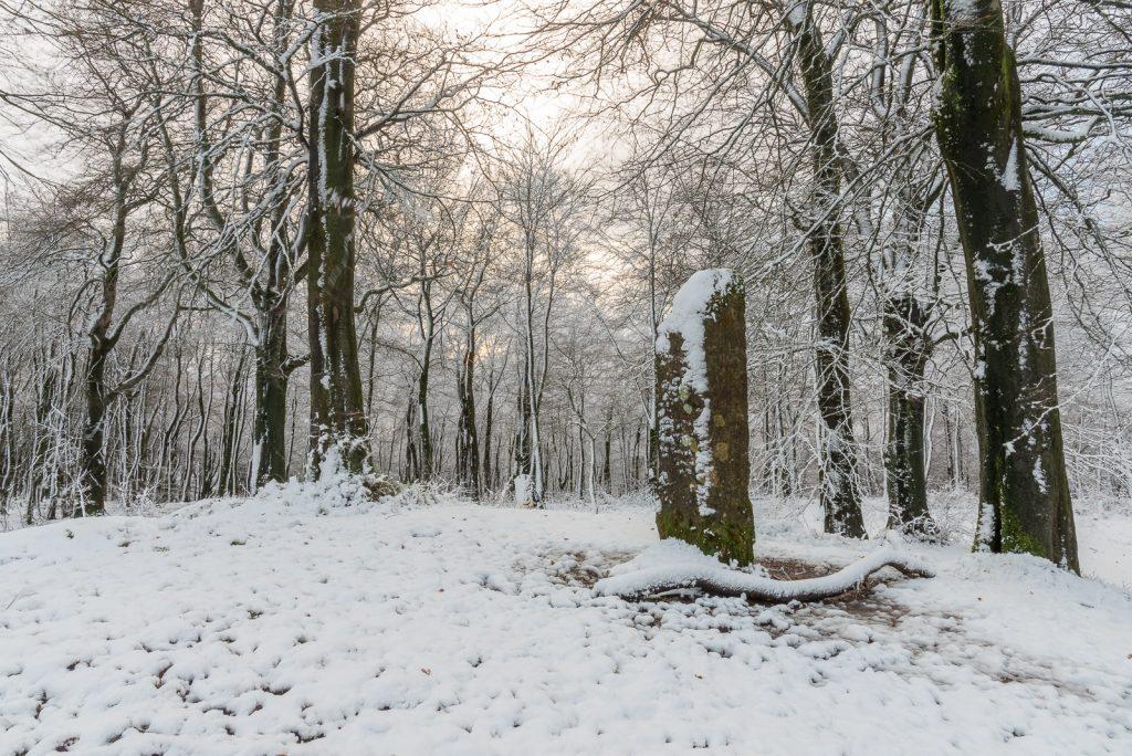Beacon Hill Woods - Mendip Hills, Somerset, UK. ID 824_3807