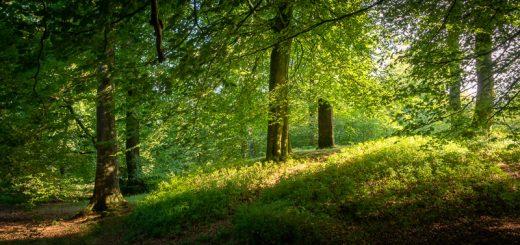 Beacon Hill Woods - Mendip Hills, Somerset, UK. ID 825_4937H