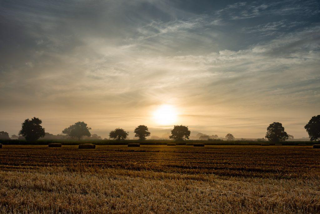 Lamyat Summer Dawn - Somerset, UK. ID 825_6309