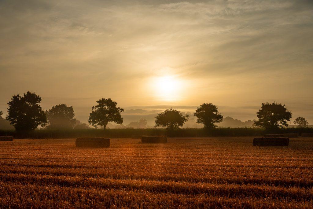 Lamyat Summer Dawn - Somerset, UK. ID 825_6311