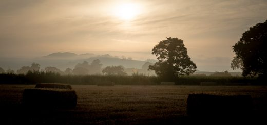 Lamyat Summer Dawn - Somerset, UK. ID 825_6335H