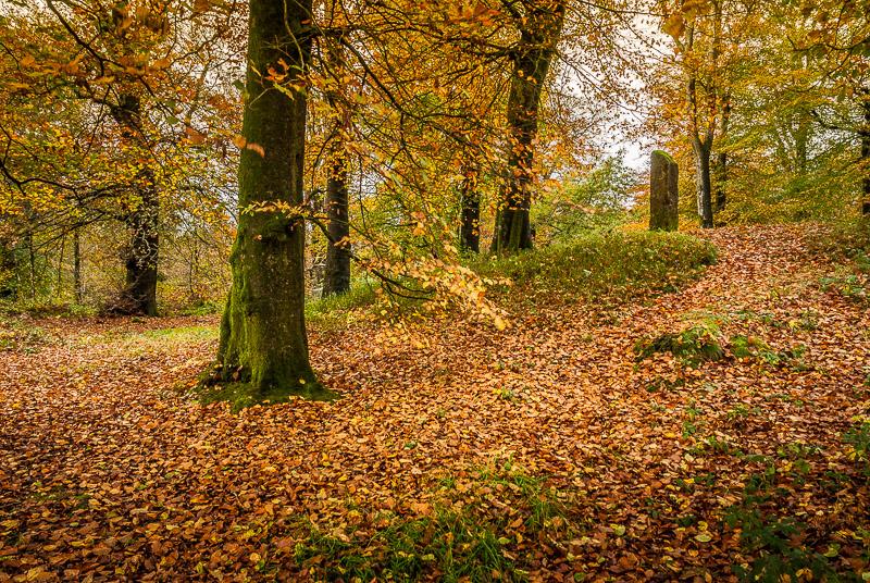 Autumn Colour - Beacon Hill, Somerset, UK. ID JB4_8873