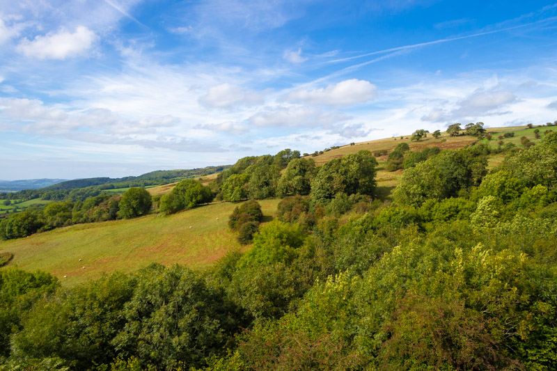 Lynchcombe - Mendip Hills, Somerset, UK. ID IMG_8615