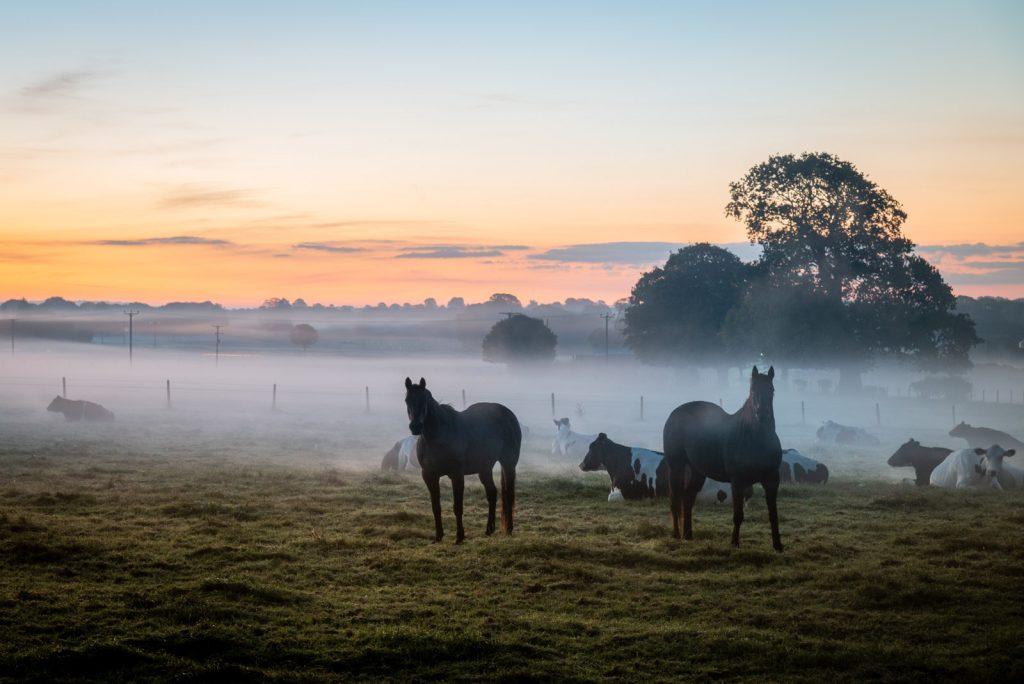 Farmland Dawn - Chewton Mendip, Somerset, UK. ID 826_0009