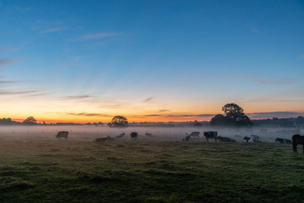 Farmland Dawn - Chewton Mendip, Somerset, UK. ID 826_0016