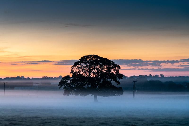 Dawn Mist - Chewton Mendip, Somerset, UK. ID 826_0020