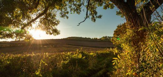 Lollover Hill - Dundon, Somerset, UK. ID 826_1727