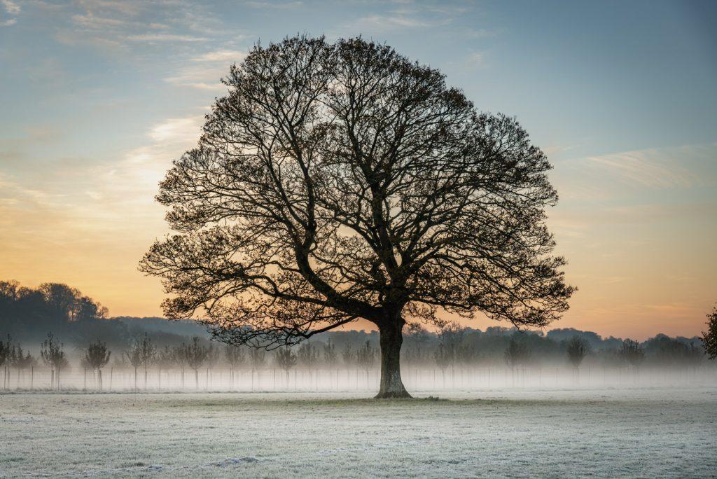 Hadspen Frost - Nr Castle Cary, Somerset, UK. ID 826_2305