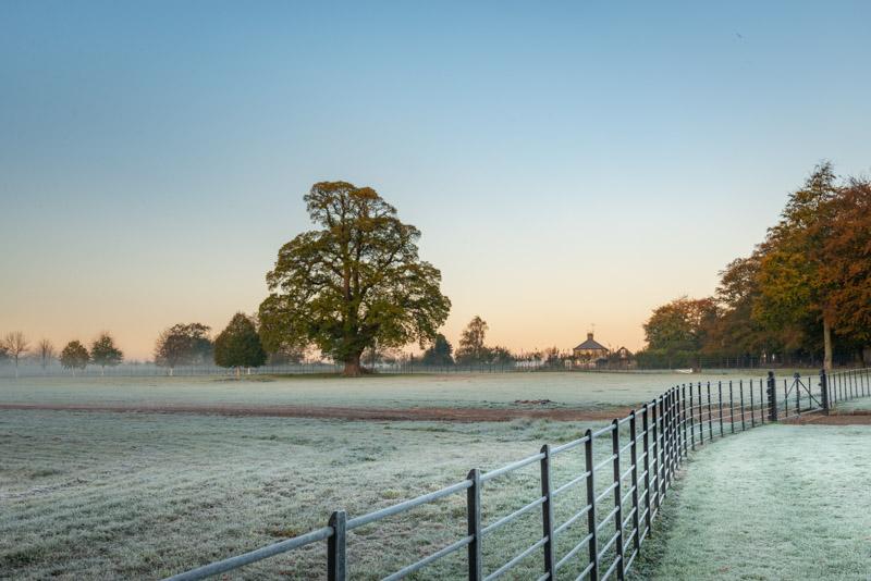 Hadspen Frost - Nr Castle Cary, Somerset, UK. ID 826_2327