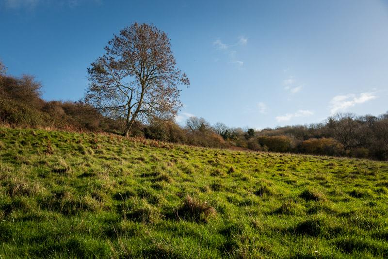Lynchcombe - Mendip Hills, Somerset, UK. ID 826_3007