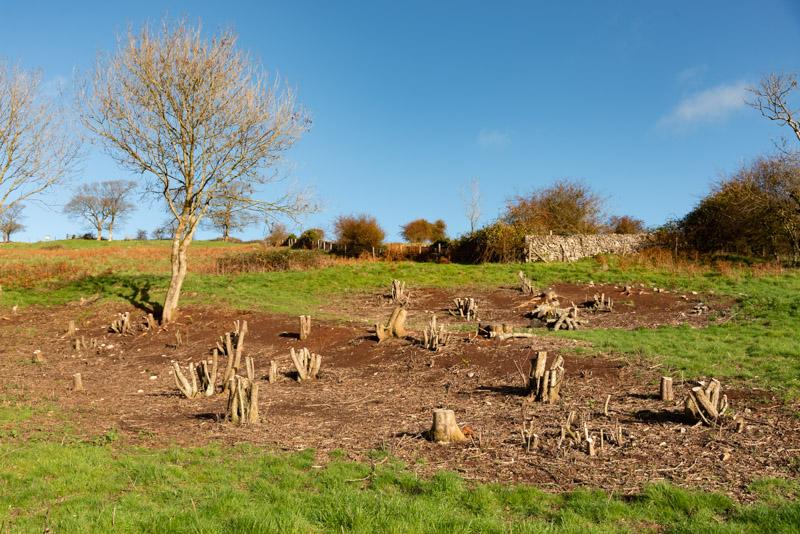 Lynchcombe - Mendip Hills, Somerset, UK. ID 826_3012