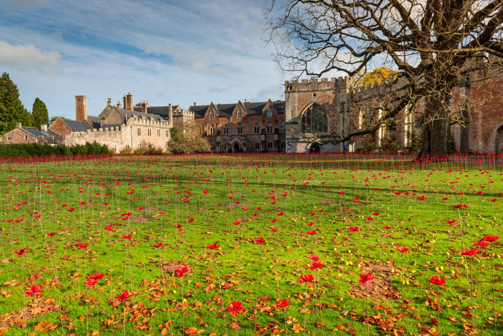 The Somerset Poppies - Bishops Palace, Wells, Somerset, UK. ID 826_4398